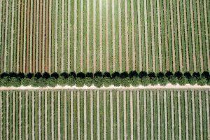 Castelvecchio - La sostenibilità